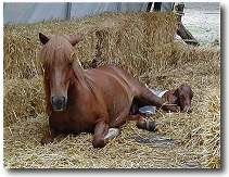 a horse and baby