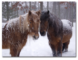 two horses in the snow